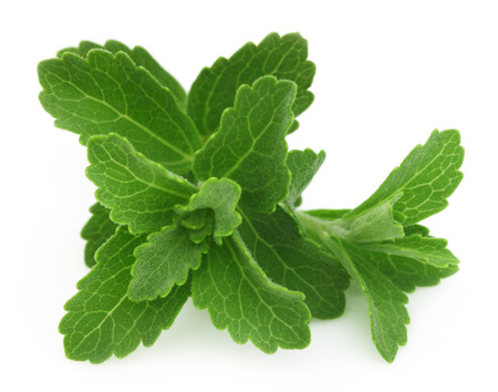 steviol: Stevia isolated over white background Stock Photo