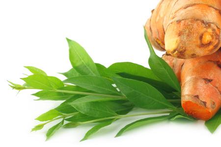 Henna-Blätter mit rohen Kurkuma Standard-Bild - 23298745