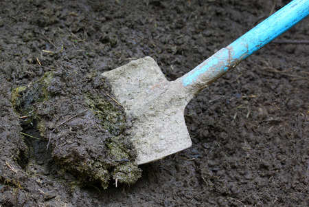 Close up of some manure with spade photo