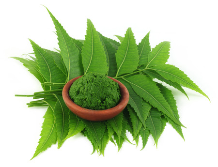 neem: Medicinal neem leaves with paste on a brown bowl
