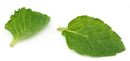 Two Fresh mint leaves over white photo