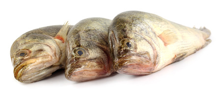 veda: Mottled Nandus or veda fish of South Asia Stock Photo