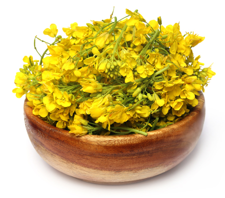 ingradient: Closeup of mustard flower on wooden bowl Stock Photo