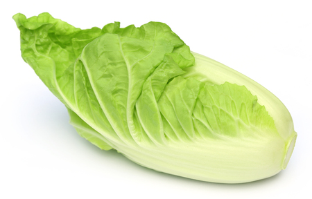 Fresh chinese cabbage over white background   photo