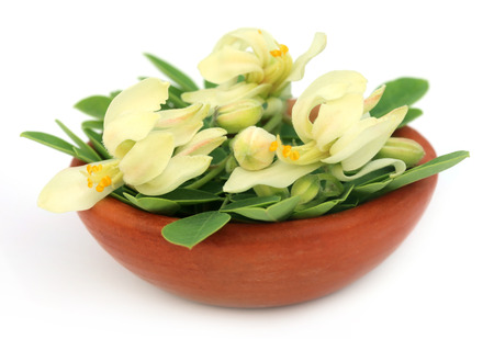 Edible moringa flower with leaves on a brown bowl over white backgrokund  photo