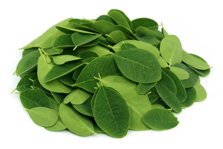 Moringa leaves over white background photo