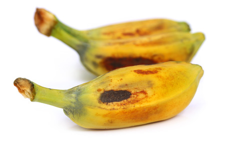 Musa balbisiana – A wild banana of Southeast Asia