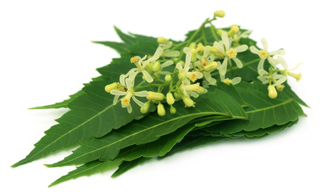 Medicinal neem leaves and flower over white background photo
