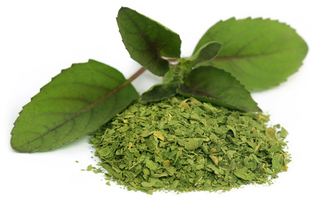 Medicinal holi basil or tulsi leaves over white background photo