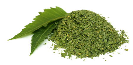 Medicinal neem leaves with dried powder over white  photo