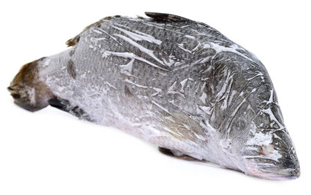 calcarifer: Frozen Barramundi or Koral fish of Southeast Asia over white background Stock Photo