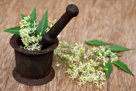 neem: Medicinal neem leaves and flower on a vintage mortar