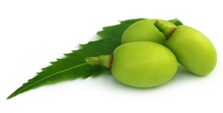Medicinal neem fruits with green leaf