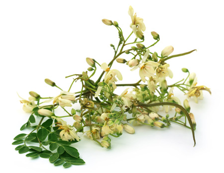 sajna: Edible moringa flower with green leaves over white background