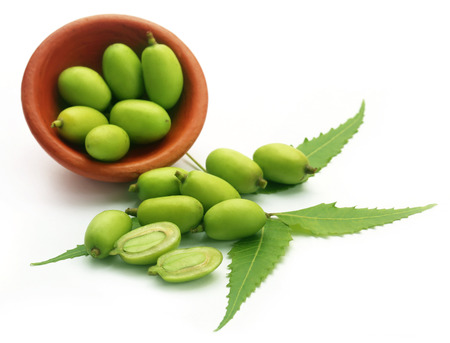 neem: Medicinal neem fruits over white background