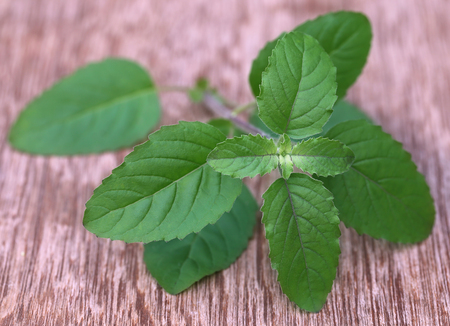 tulsi: Medicinal red tulsi leaves on wooden surface