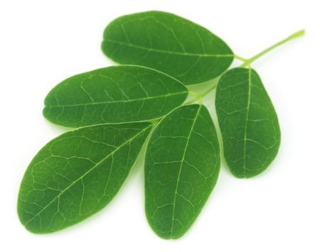 Moringa leaves over white background Stok Fotoğraf