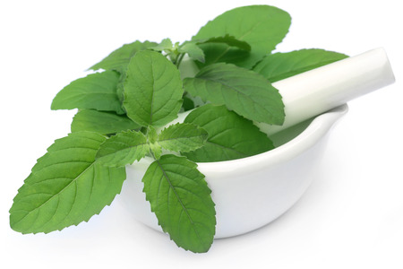 tulasi: Medicinal holy basil or tulsi leaves on a mortar with pestle