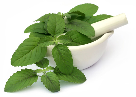 tulsi: Medicinal holy basil or tulsi leaves on a mortar with pestle