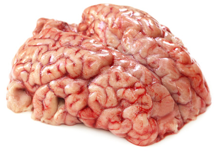 animal vein: Brain of a cow over white background Stock Photo
