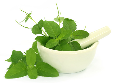 tulasi: Medicinal herbs with mortar and pestle over white background Stock Photo