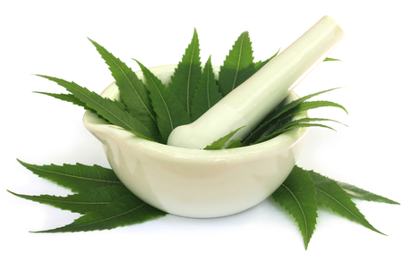 neem: Mortar and pestle with medicinal neem leaves over white background