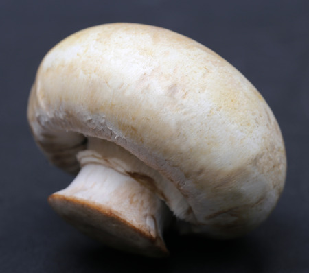 agaricus: Close up of Button Mushroom