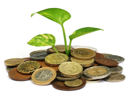 money plant: Money plant grows from pile of coins