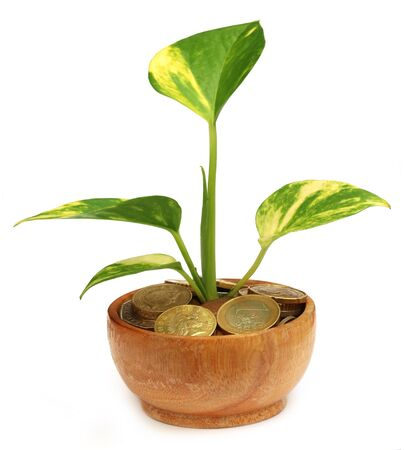 money plant: Money plant grows from coins over white background