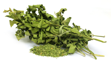 Dried moringa leaves over white background photo