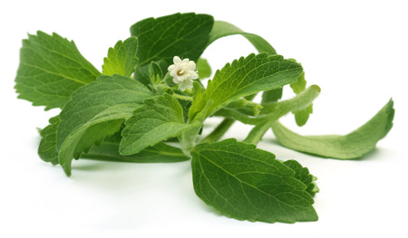 Stevia leaves with flower over white background Stockfoto