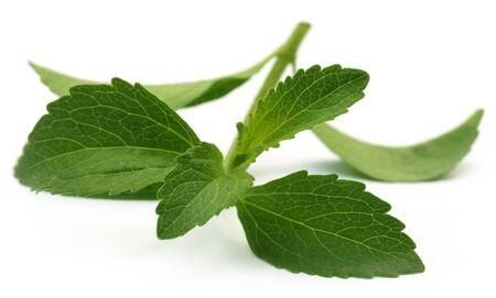 steviol: Stevia leaves over white background