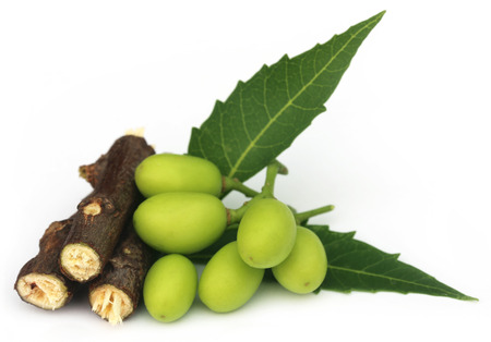 alternative wellness: Medicinal neem fruits with twigs over white background