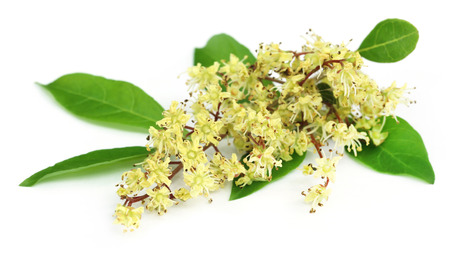 Henna leaves with flower over white background Zdjęcie Seryjne - 37832859