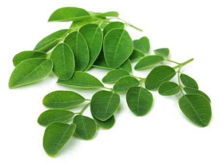 Moringa leaves over white background 스톡 콘텐츠