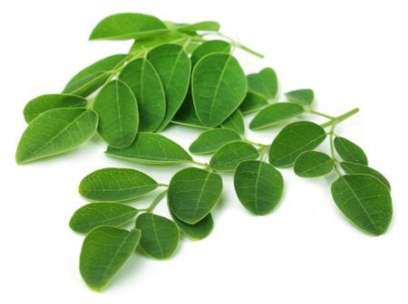 Moringa leaves over white background Stockfoto