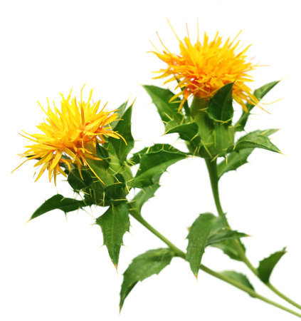 additive: Safflower used as a food additive over white background