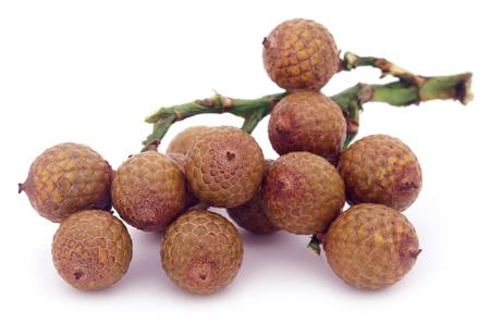 calamus: Tropical Calamus palm fruits over white background