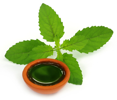 tulasi: Medicinal holy basil or tulsi leaves with extract over white background Stock Photo