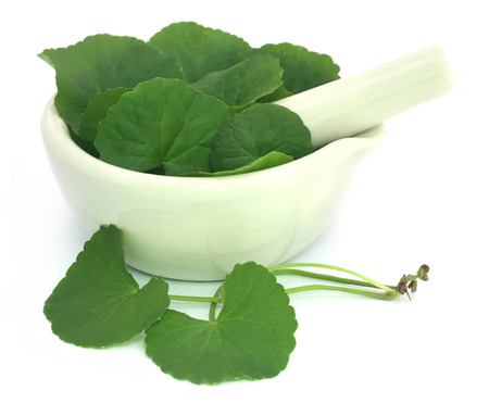 longevity medicine: Medicinal thankuni leaves of Indian subcontinent with mortar and pestle