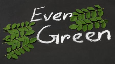 mlonge: Moringa lascia su una superficie di ardesia nera scritta Ever Green