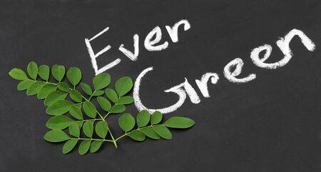 mlonge: Moringa leaves on a black slate surface written Ever Green