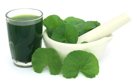 subcontinent: Medicinal thankuni leaves of Indian subcontinent with extract