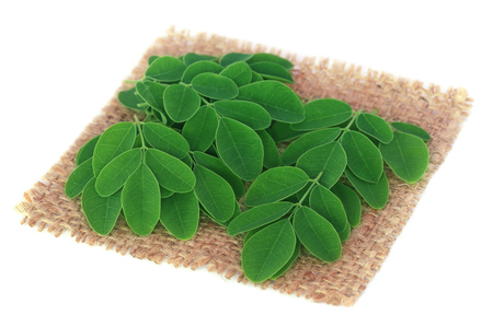 sajna: Edible moringa leaves on sack surface over white background