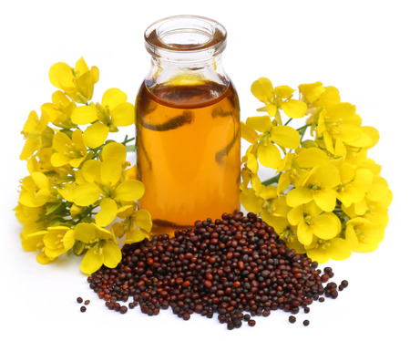 Mustard oil with flower over white background