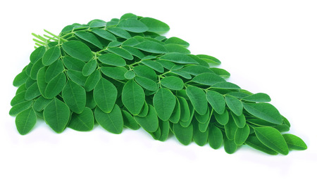 sonjna: Moringa leaves over white background Stock Photo
