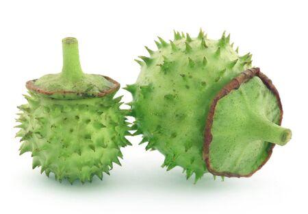 seedpod: Medicinal Datura fruits over white background