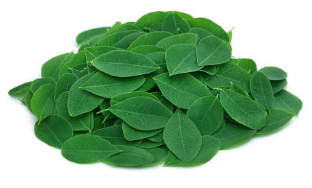 marango: Moringa leaves over white background Stock Photo
