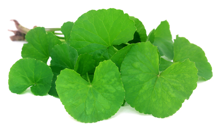 subcontinent: Medicinal thankuni leaves of Indian subcontinent Stock Photo