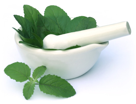 tulsi: Medicinal holy basil or tulsi leaves with mortar and pestle
